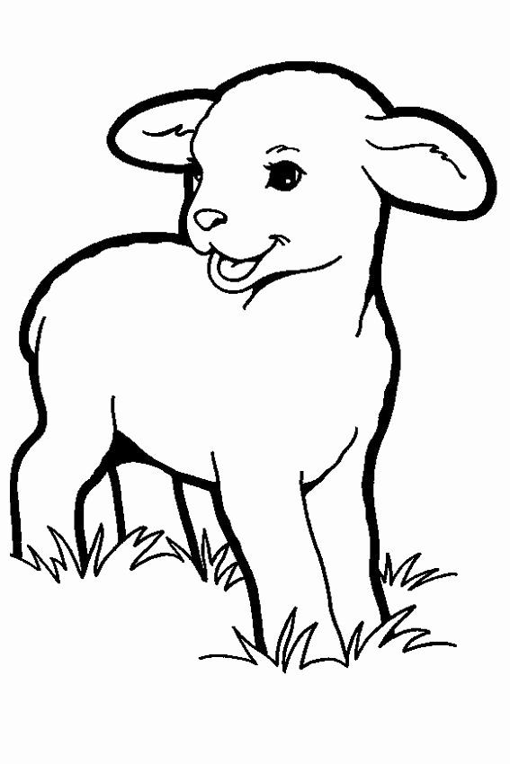 Animals Coloring Book Pdf Free Download Beautiful Lamb Coloring