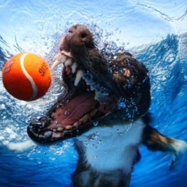 Onderwaterfotografie van honden