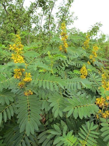 229 best wisconsin native plants images on pinterest