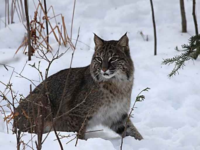 oscoda cougars personals This story has become the most popular ever on the absolute michigan facebook state believe they've seen cougars in alcona and oscoda counties in.