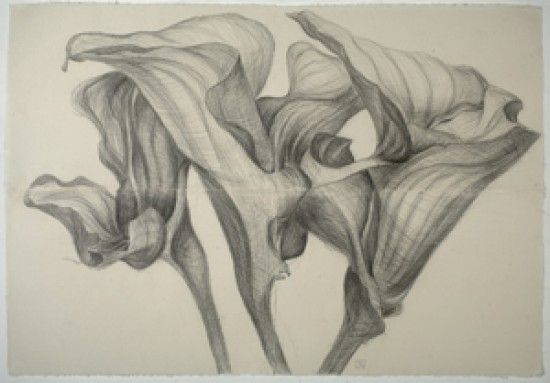 Quick Fix for the Case of The Mondays: Botanical Art/ lilies