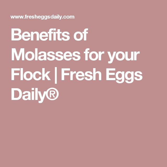 Benefits of Molasses for your Flock | Fresh Eggs Daily®