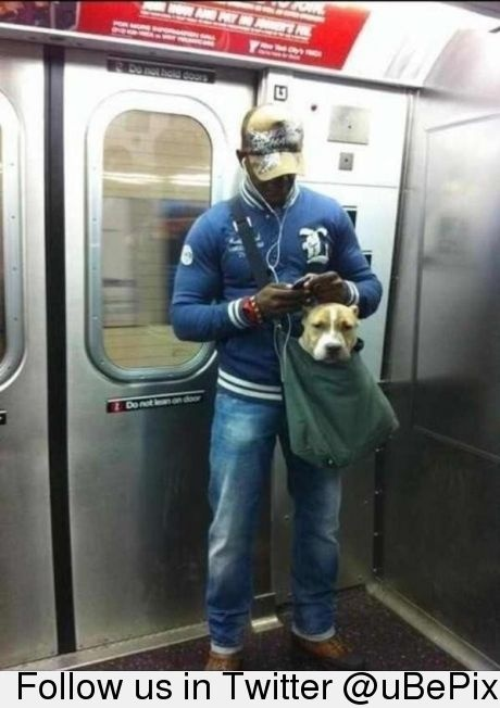 Because Chihuahas are too mainstream