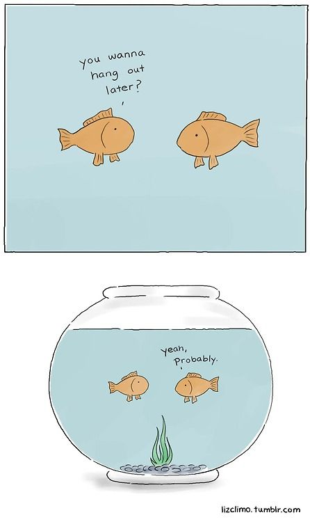 81 best fish humor images on pinterest for Fish bowl pets