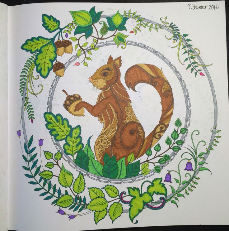 squirrel From Johanna Basfords 'enchated forest'
