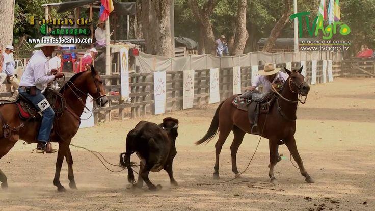 Competencia Regional de Vaqueria Mariquita Tolima I- TvAgro por Juan Gon...