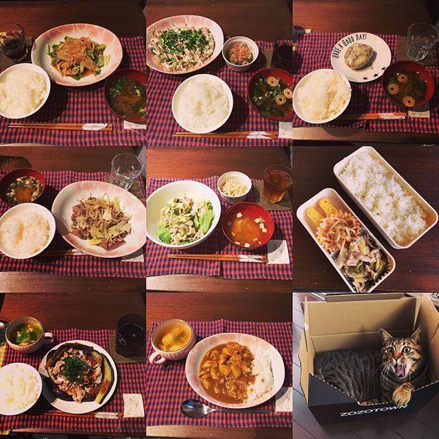 最近のご飯まとめて更新! ……………………ん? * * * #夜ごはん#晩ごはん#まとめて更新#dinner#お弁当#彼弁当#料理勉強中#お弁当初心者#料理記録#料理日記#まちがいさがし#クックパッド#猫#とらのすけ#虎之助#cat#愛猫