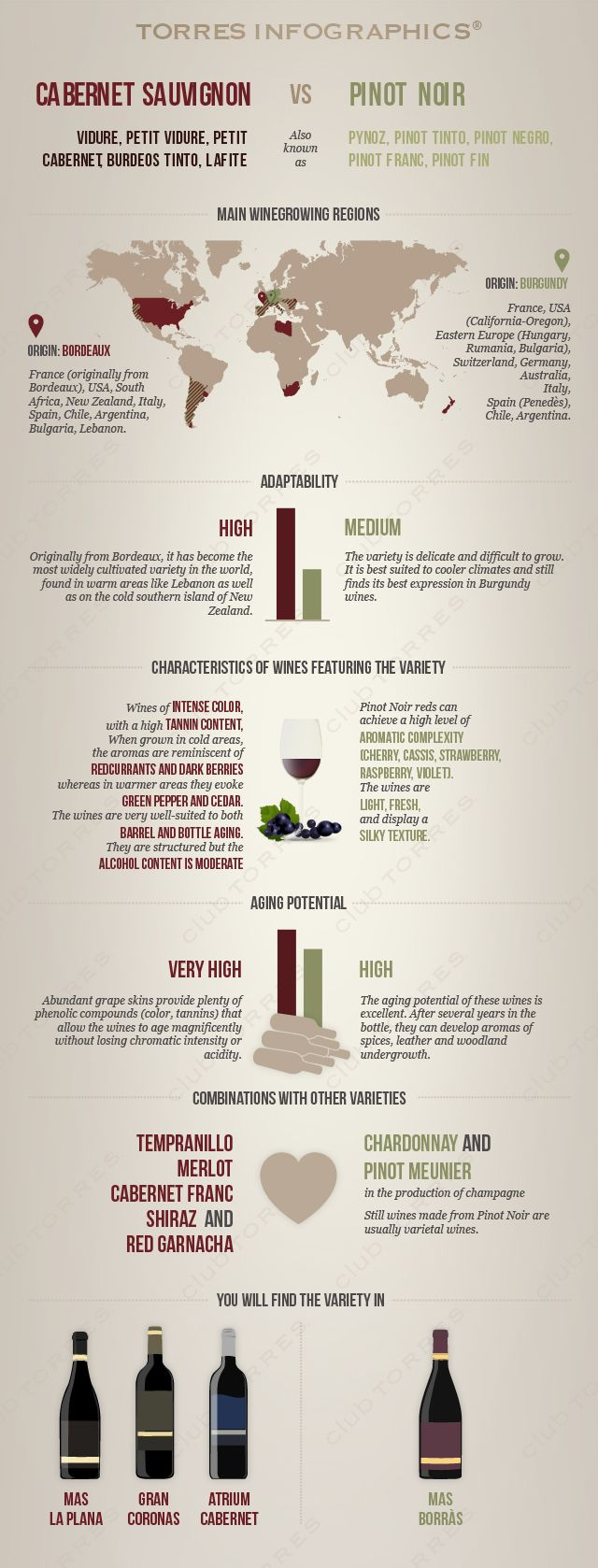 Cabernet Sauvignon vs Pinot Noir: Infographic by 'Club Torres' #wine101 #infographic