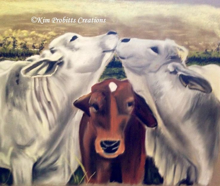 Drawings of Cows from a client photograph, Yes this is exactly what they were doing in the photo. Very cute.