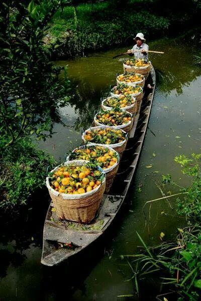 ✿ ❤ Ben Tre Province, Mekong Delta, southern Vietnam