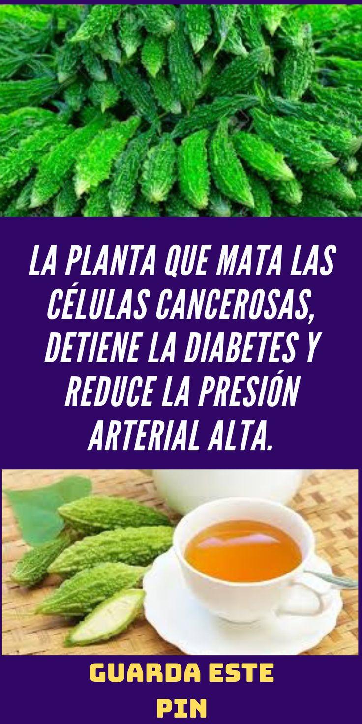 La planta que mata las células cancerosas, detiene la diabetes y reduce la presión arterial alta.