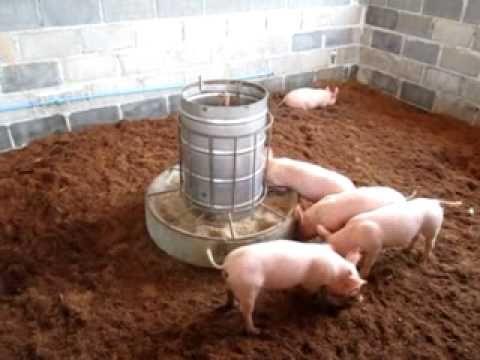YouTube, odorless pig pen