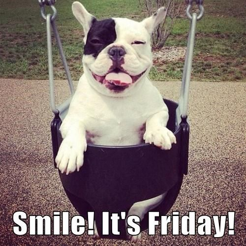 Smile! It's Friday! #Friday #Funny #Dogs #FrenchBulldog ...