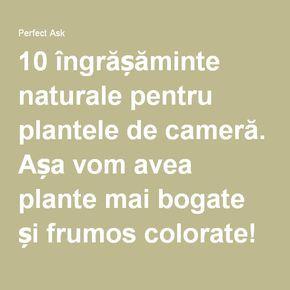 10 îngrășăminte naturale pentru plantele de cameră. Așa vom avea plante mai bogate și frumos colorate! - Perfect Ask