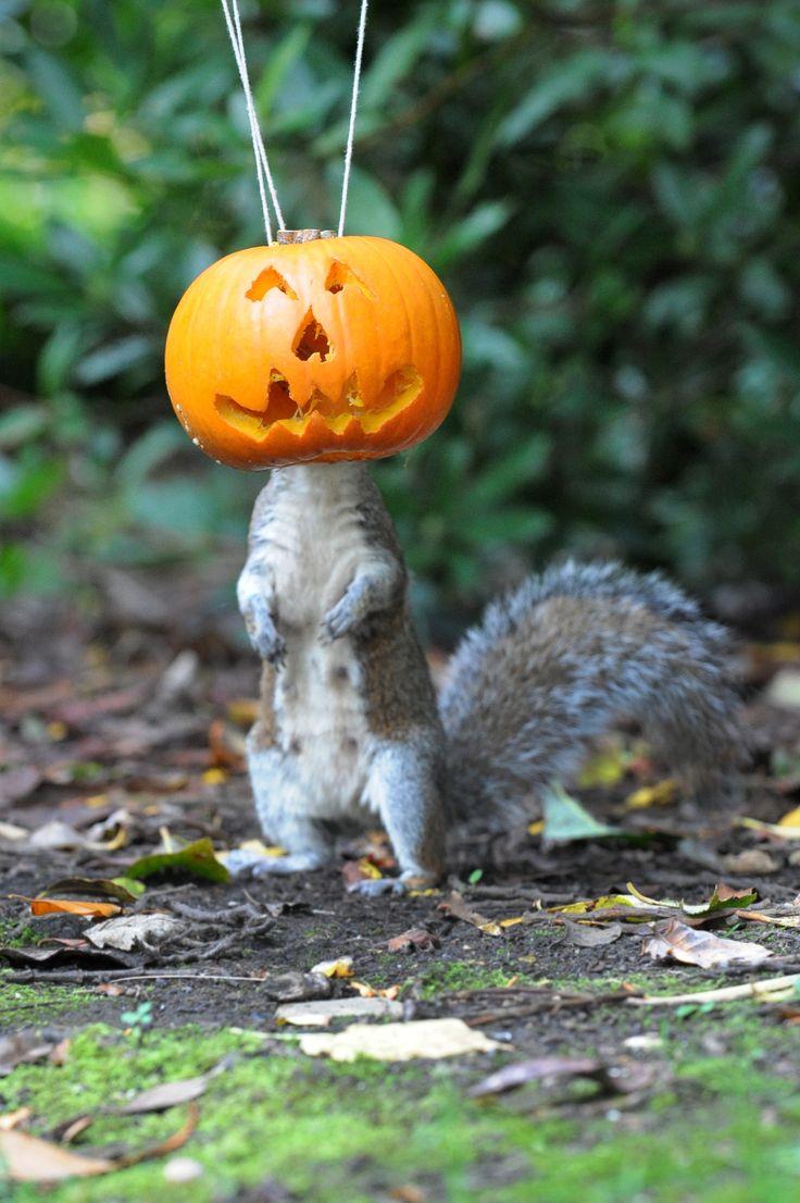 HAPPY HALLOWEEN SQUIRREL. Just laugh! Squirrel feeder