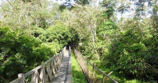 Hutan Lindung Sungai Wain The Real Hutan Tropis Di Balikpapan