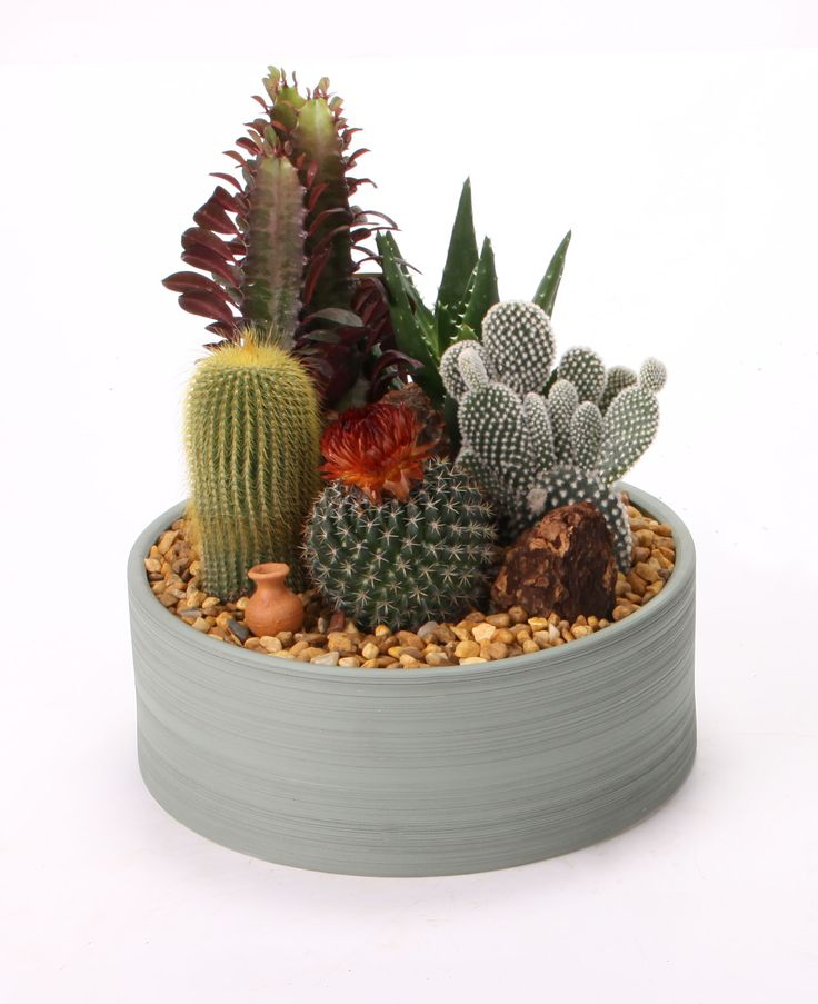 Mini Cactus Garden Lovely Flowers Plants Etc - small cactus garden design