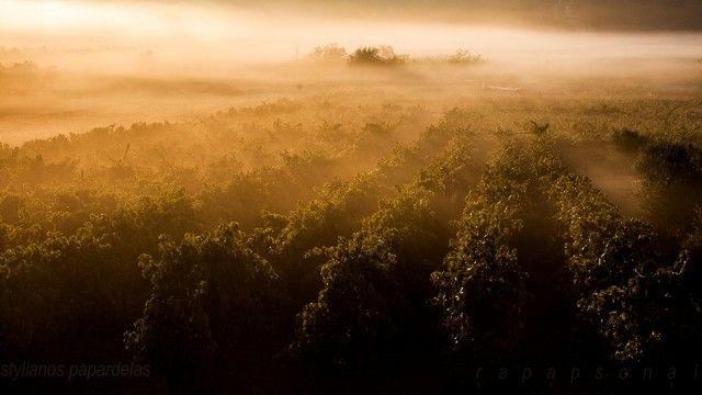 Όταν η φύση ζωγραφίζει για σένα ένα υπέροχο πρωινό σε ένα αμπέλι δεν μπορείς παρά να το απολαύσεις, χωρίς δεύτερες σκέψεις - CRETAZINE ♥ Η Κρήτη όπως τη ζούμε