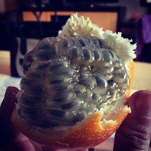 Granadilla Colombian fruit.... ONE OF MY FAVOURITE!!!