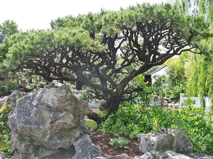 16 Best Pine Tree Gardens Images On Pinterest