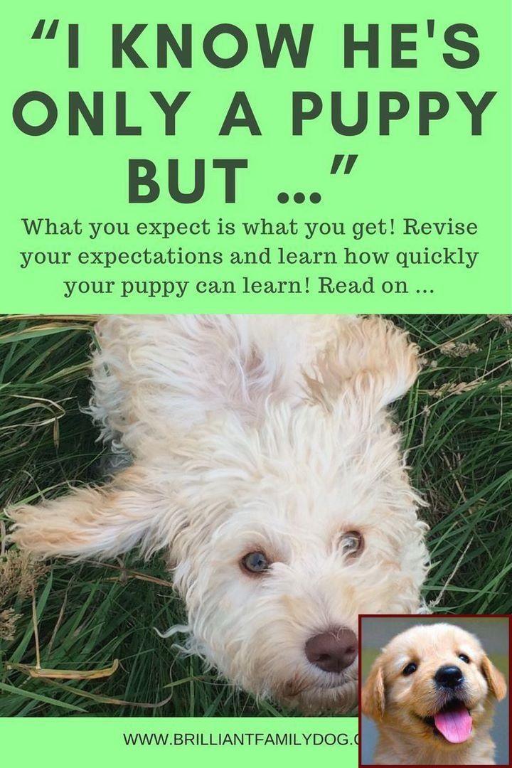 1 Have Dog Behavior Problems? Learn about Dog Behavior