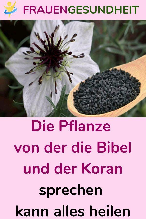 Die Pflanze von der die Bibel und der Koran sprechen kann alles heilen #Pflanze …