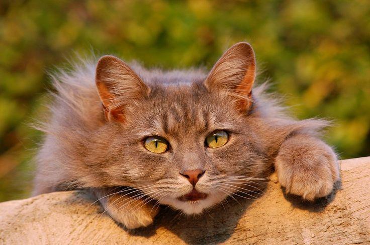 Happy #Caturday! https://pixabay.com/en/cat-feline-furry-pet-close-up-401124/