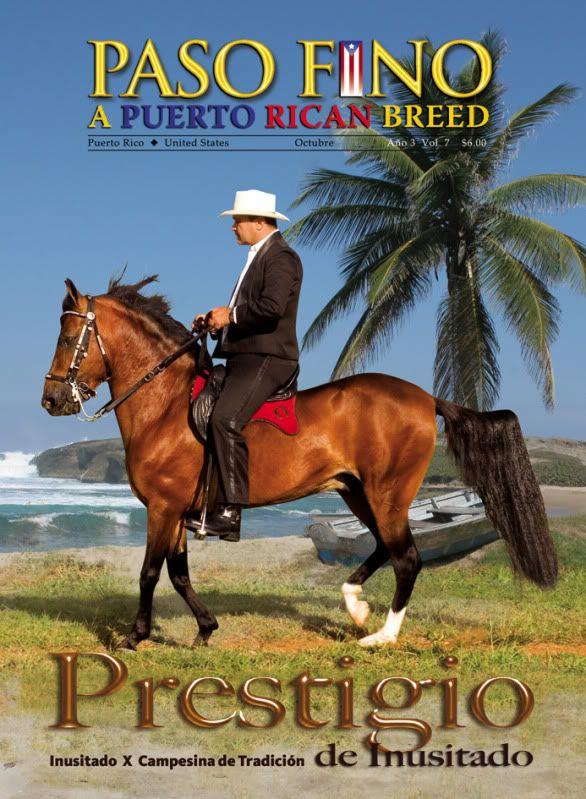 Caballos De Paso Fino | El paseo de los caballos Paso Fino de Puerto Rico es muy rápido y muy ...