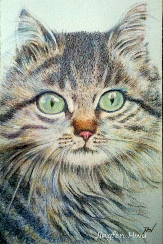 "cat drawing  ""A Handsome Cat ""  long hair cat , furry cat, maine coon"