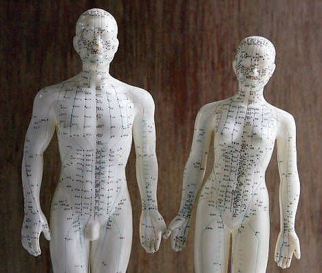 17 Best Images About Acupuncture Models On Pinterest