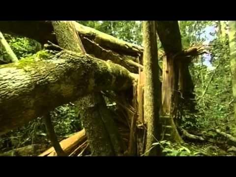 Documental  Selva tropical, el secreto de la vida