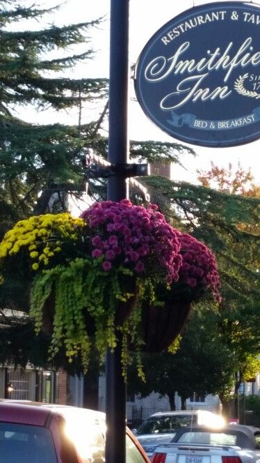 Fall Hanging Baskets:  Belgian mums with Creeping Jenny