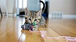 how to keep cat brain sharp