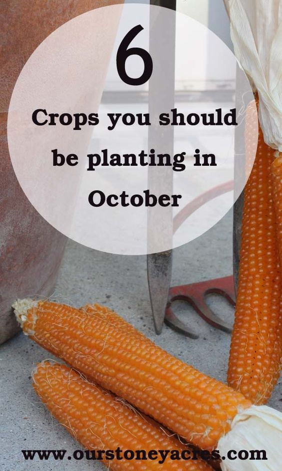 As the weather cools and you start putting your garden to bed for the winter use this October planting guide to get a few seeds in your garden for spring harvest.