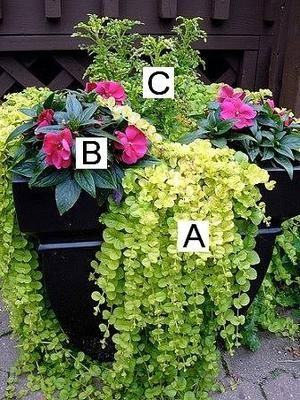 Container Flower Gardening Ideas: A = Creeping Jenny, B= Impatiens, C =