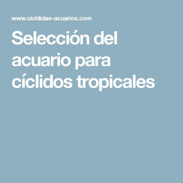 Selección del acuario para cíclidos tropicales