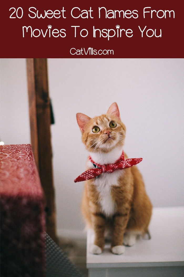 20 Sweet Cat Names From Movies To Inspire You Catvills Italian Food Names Cat Names Cats