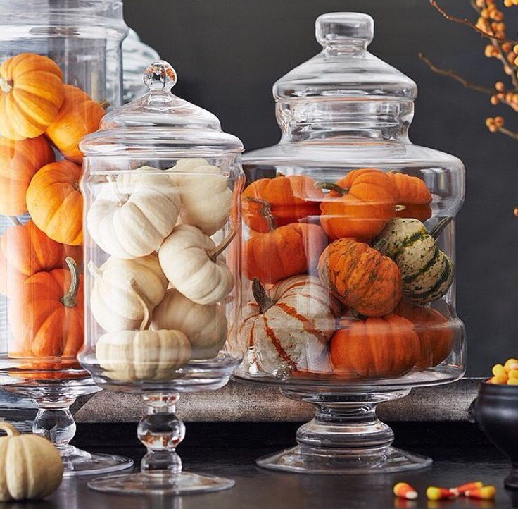 fill apothecary jars with various pumpkin... bam