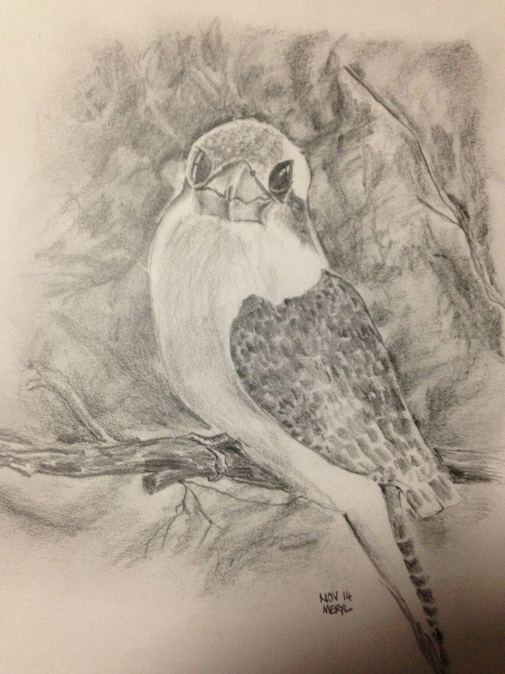 Sketch of my favourite kookaburra