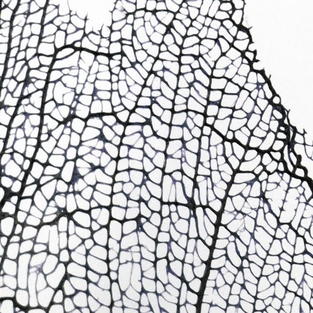 Skeleton Leaf - delicate patterns in nature; organic texture inspiration