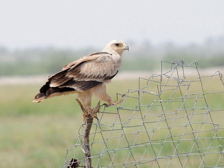 Bird Sanctuaries in Rajasthan, India @ Sanctuariesindia.com