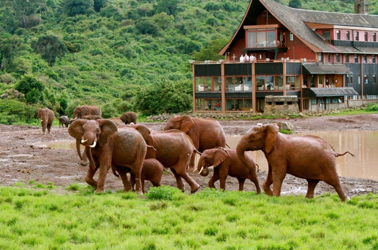 The Ark, Kenya overlooks a floodlit waterhole where amazing wildlife activity goes on day and night.  http://www.thebigjourneycompany.com/grand_safari_of_kenya_escorted_tour