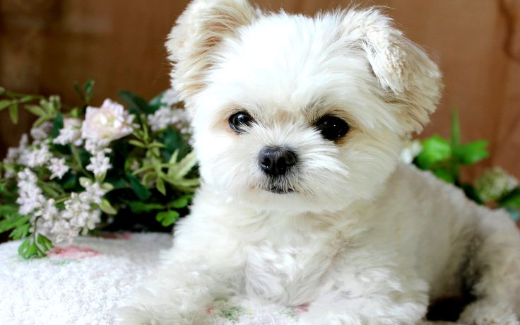 fluffy puppy :D | Cute and Happy Things :)