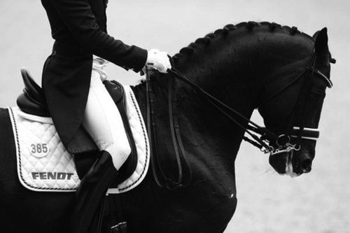 Black Dressage Horse Dressage Horses Horses Dressage
