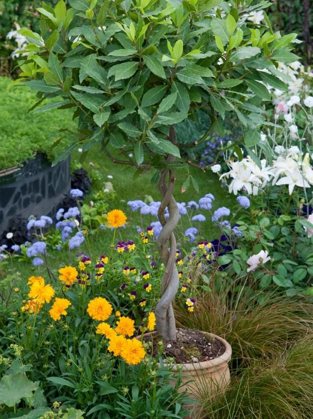 Grow Your Own Kitchen Countertop Herb Garden Plants Bay 400 x 300
