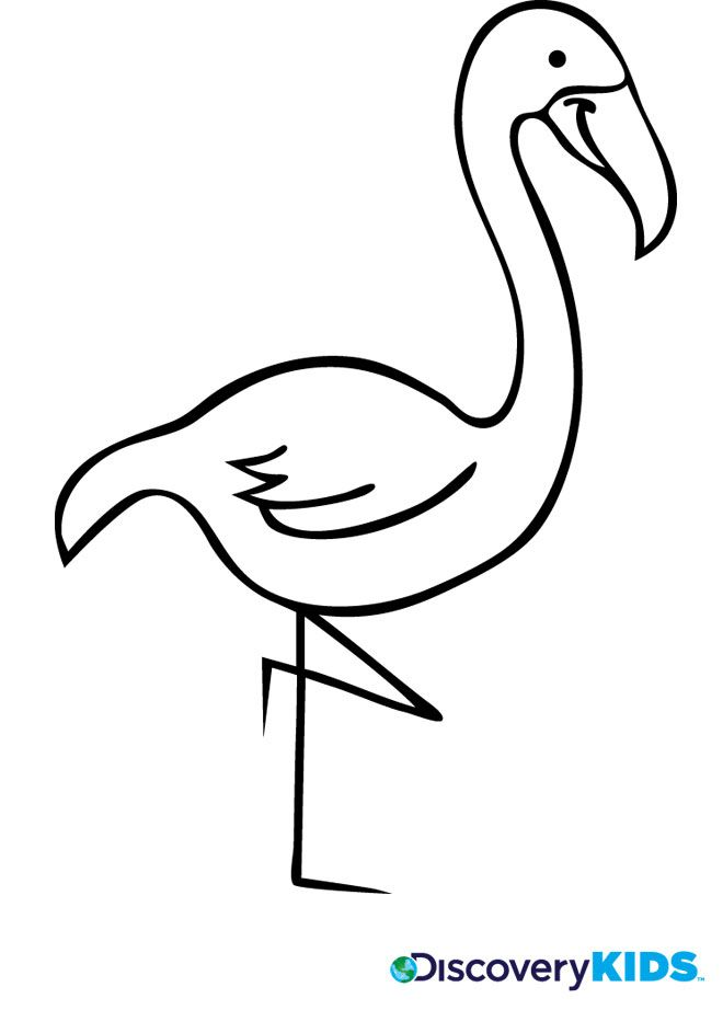 coloring pages flamingo - photo#24