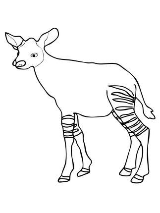 Click to see printable version of Baby Okapi Calf Okapi