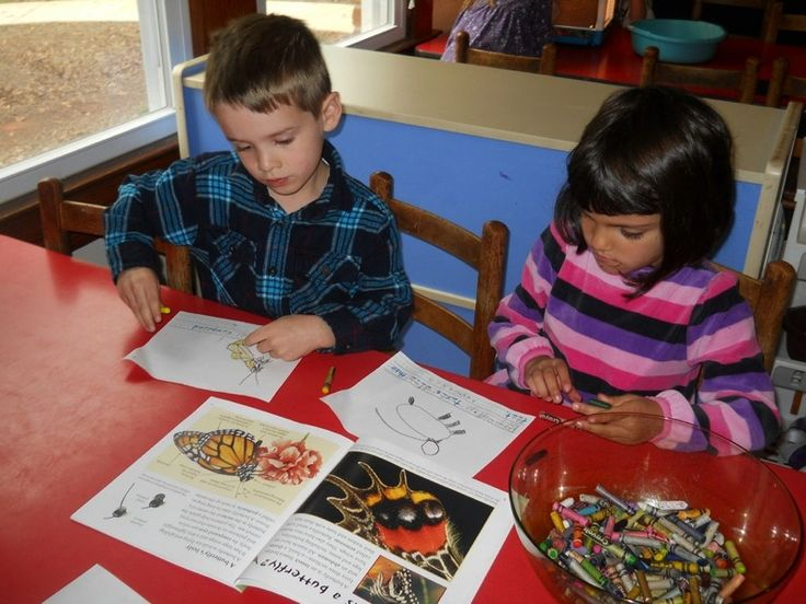 The Project Approach In Action: The Butterfly Project | Teaching, Learning, and Living | Meredith W. Burton