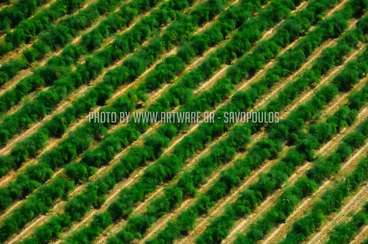 Aerial photography from a helicopter in Northern Greece. Copyrights www.artware.gr