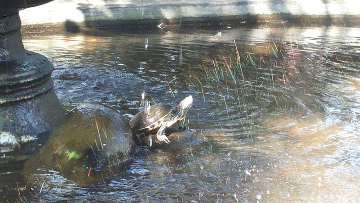 Turtlle kwan im tample banten